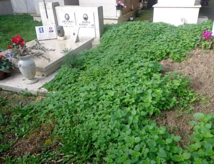 foto cimitero2